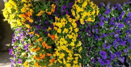 blommor-htc-10-990x505